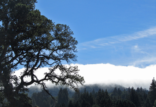 Fog over Sonoma Mountain - Jack London State Historic Park