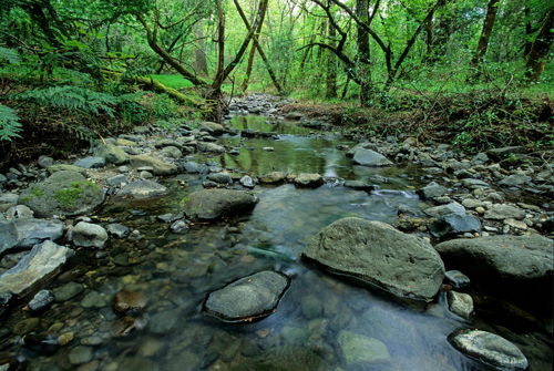 Ritchey Creek in Bothe-Napa Valley State Park, Photo by passerine, Create Commons license