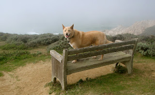 Blogger Lucy D'Mot chronicled all 70 parks slated for closure on her blog State Park Closure trip. She took a picture of her traveling companion at Gray Whale Cove State Beach.