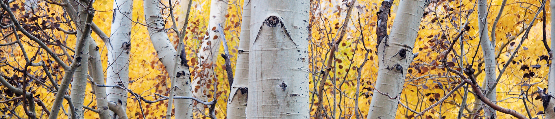 Aspens show their colors near Silver Lake.